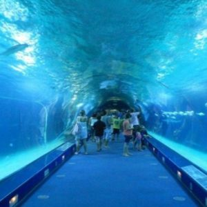 EXCLUSIVE HALF DAY AQUARIUM TOUR